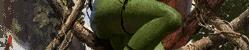 Forest Whisperer
